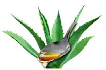 Sirop agave 2